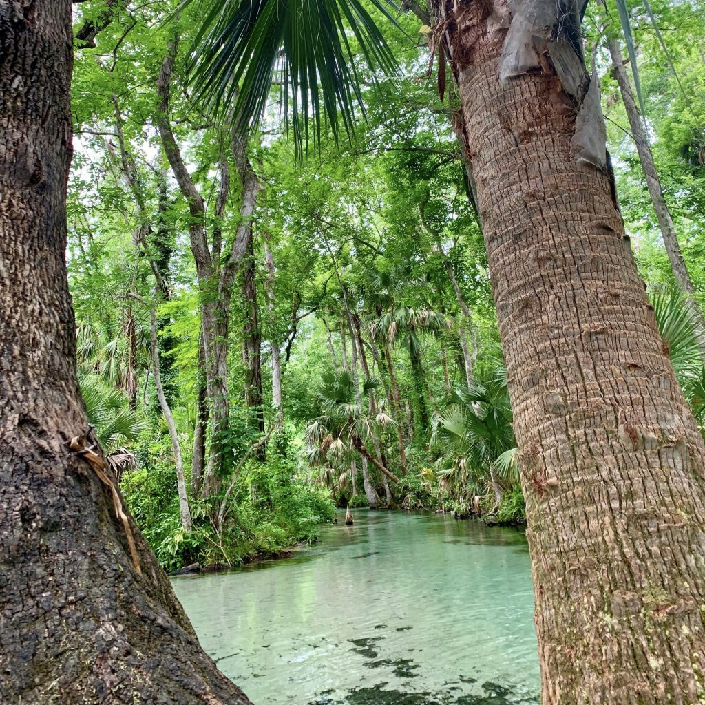 A view from between two palm trees looking downstream.