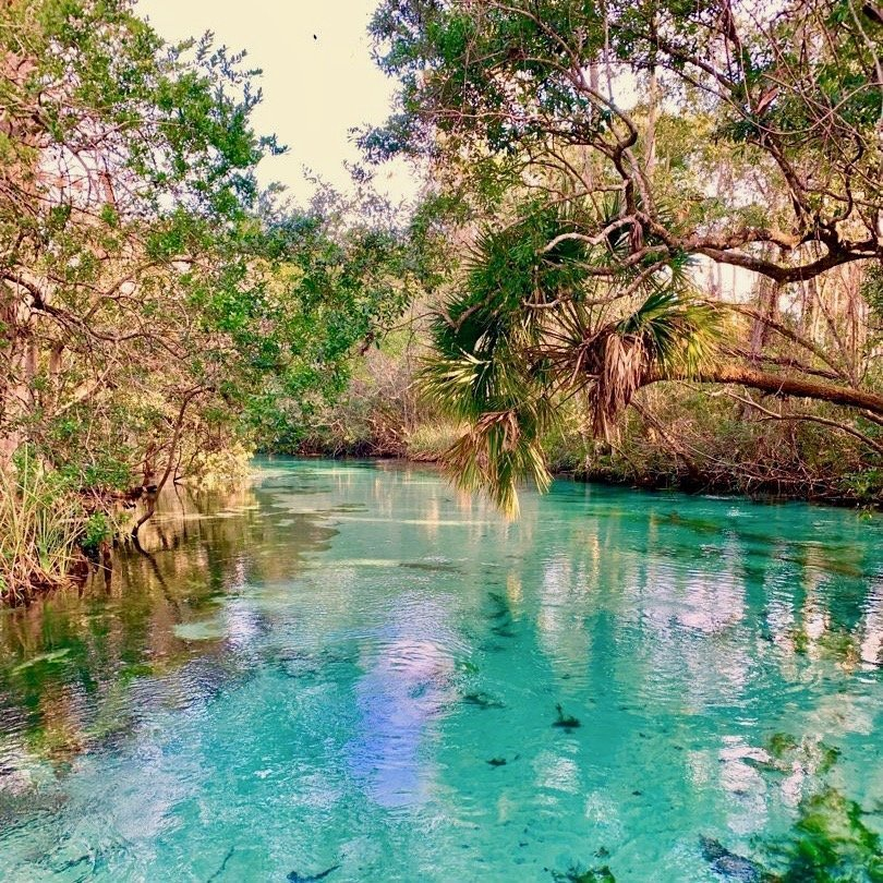 A view of the crystal clear water while kayaking Weeki Wachee Springs.