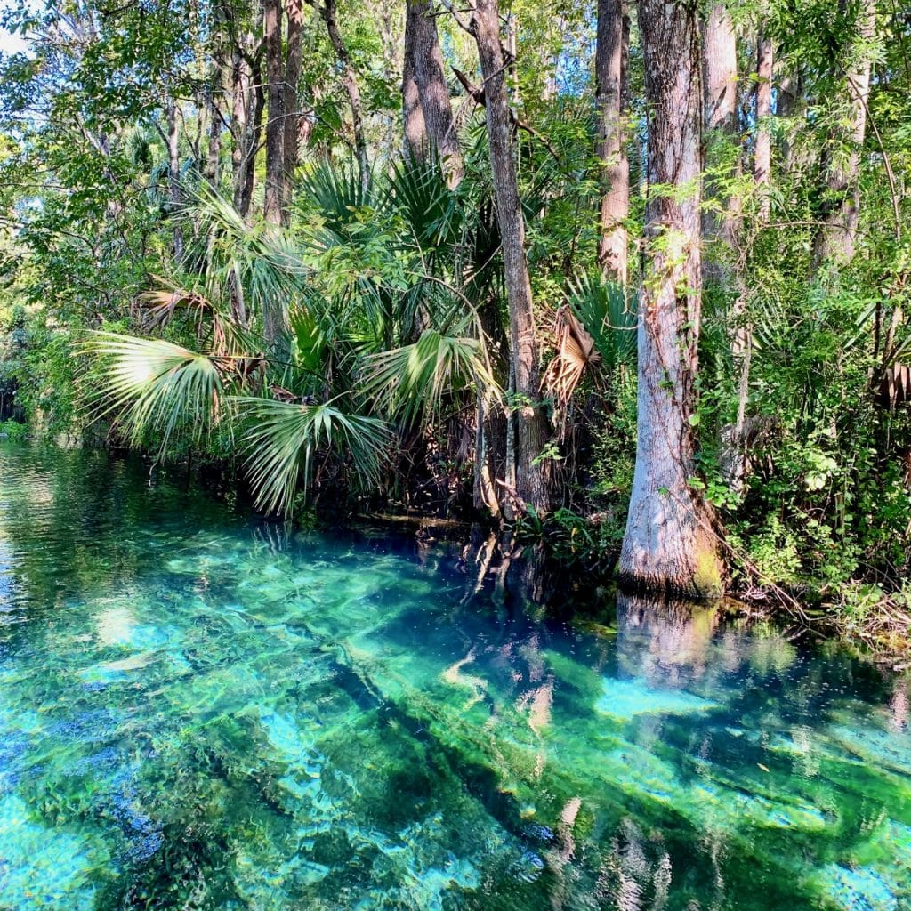 A photo taken while kayaking Silver Springs shows the crystal clear water.