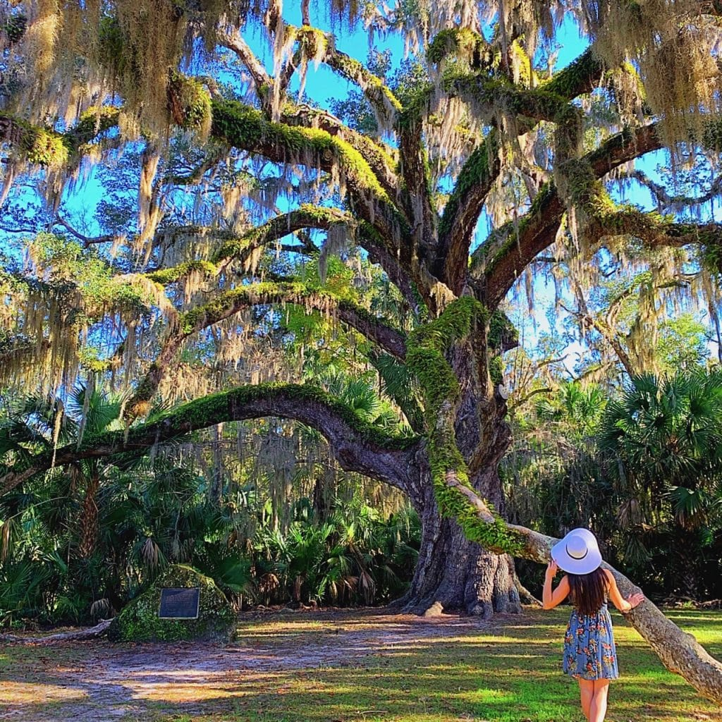 A girl stands in front of the large Fairchild Oak tree that is located in the Bulow Creek State Park, Florida.