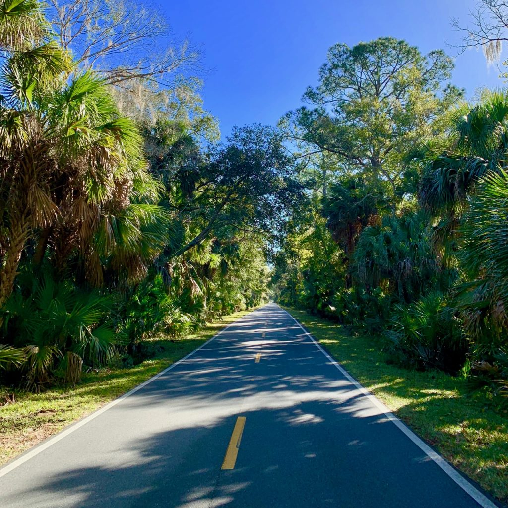 A two lane road cuts through the beautiful lush forest near the Tomoka State Park.