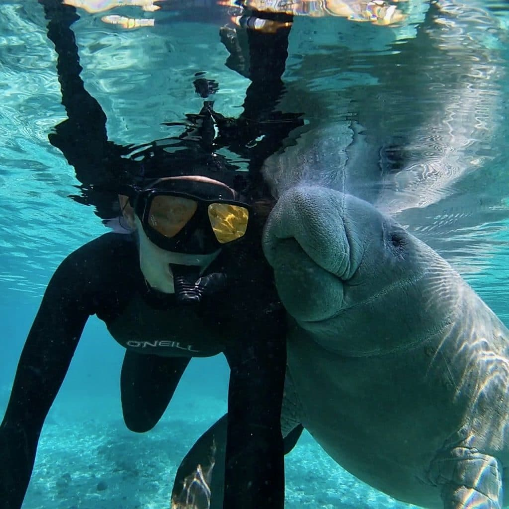 A swimmer and manatee pose for a selfie in Three Sisters Spring at Crystal River, Florida.