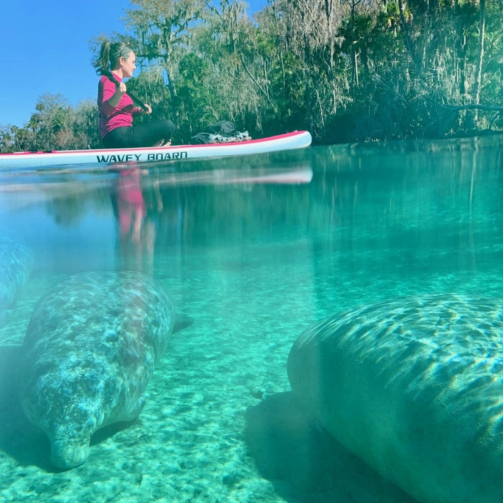 Manatees and kayaker at Silver Glen Springs in the Ocala National Forest, Florida.