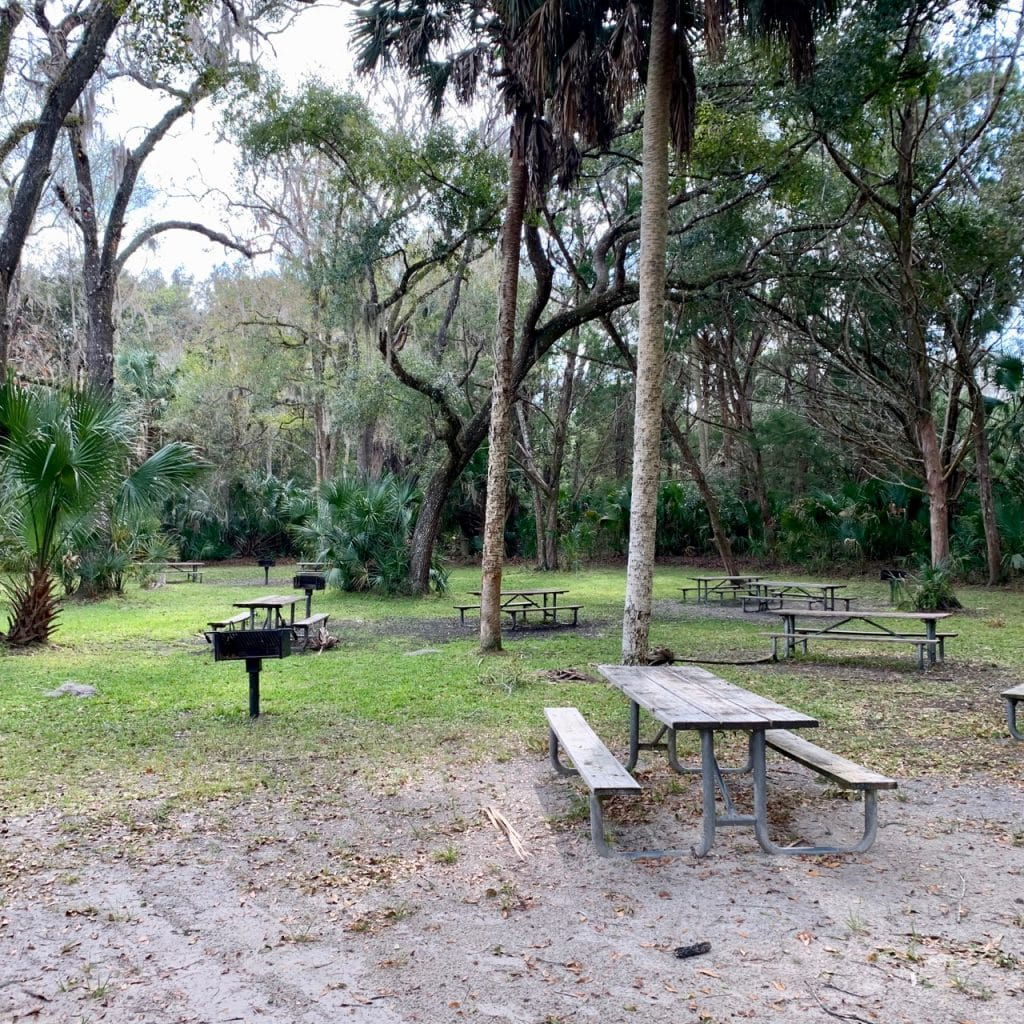Picnic area at Silver Glen Springs in the Ocala National Forest, Florida.