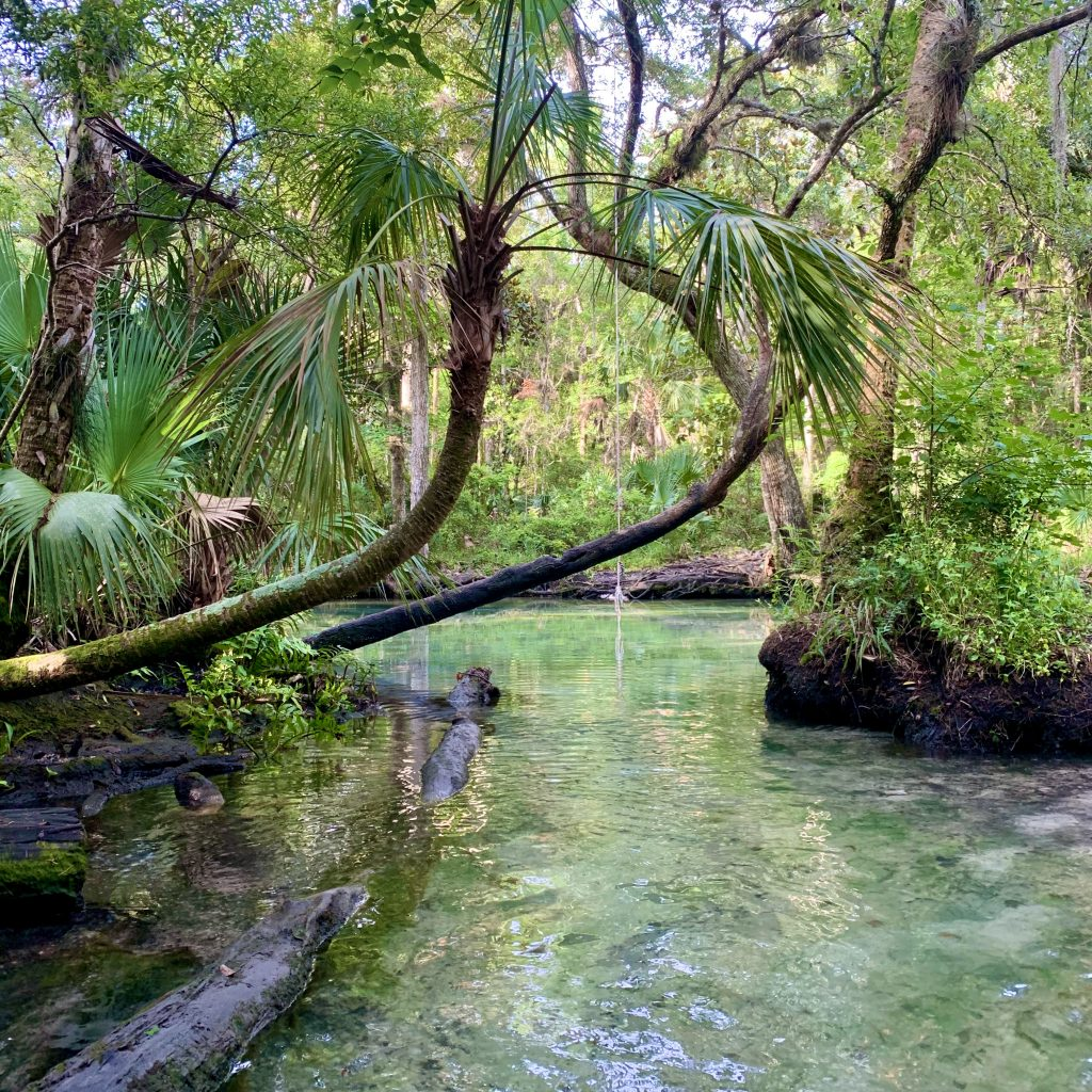 A Rope Swing At The Crack In The Chassahowitzka