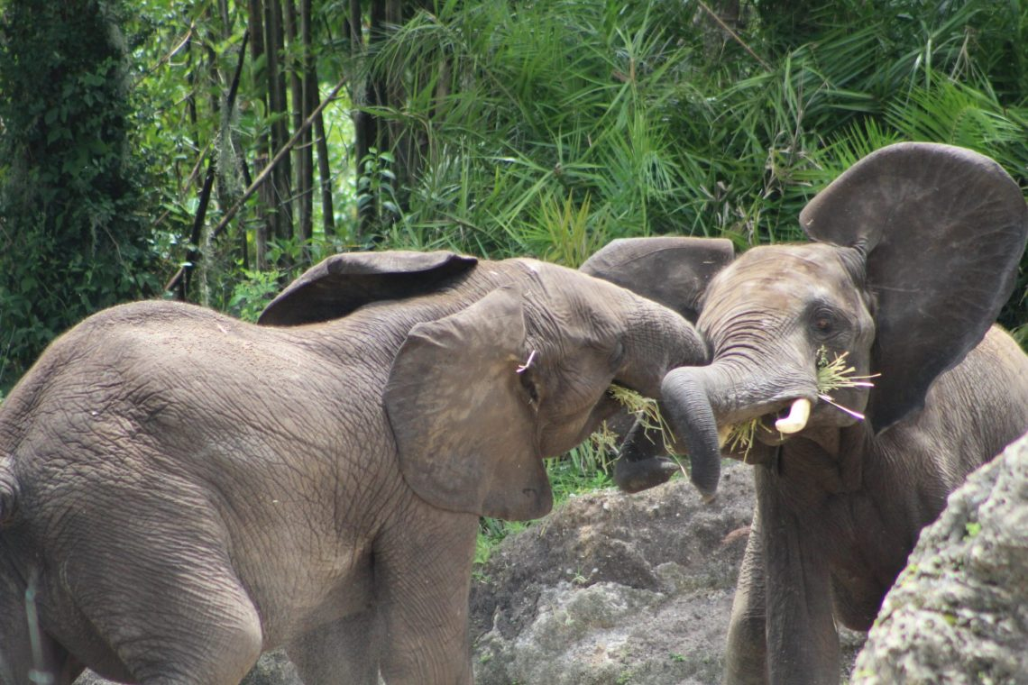A travel camera takes a photo of two elephants tussling.