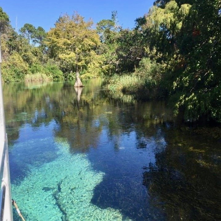 The crystal clear water of the Weeki Wachee River as seen from the boat ride available at the park.