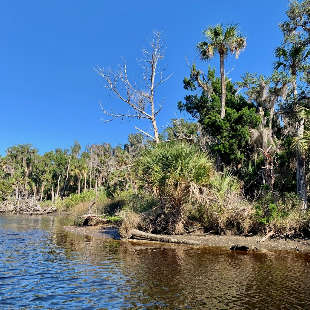 A beach area filled with palm trees and a lush forest line the Tomoka River.