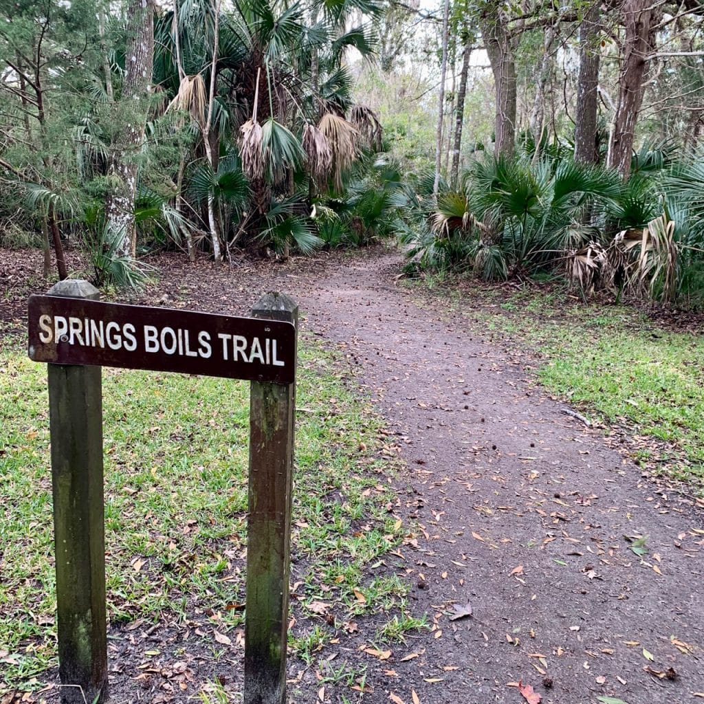 Spring Boils Trail at Silver Glen Springs in the Ocala National Forest, Florida.