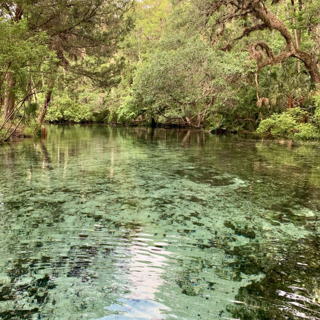 Crystal clear water at the Chassahowitzka Wildlife Refuge.