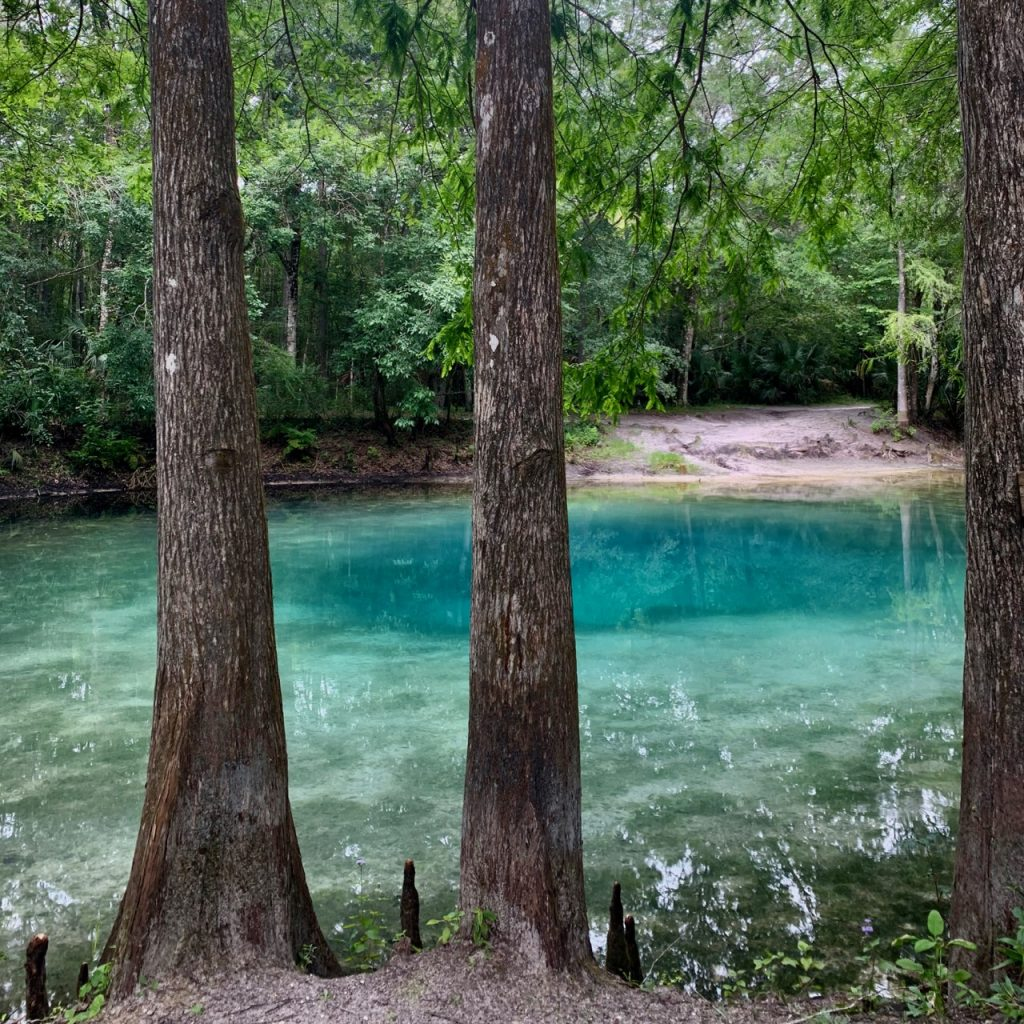 Big Citrus Blue Spring off the Withlacoochee River.